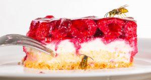 Wespen auf Kuchen