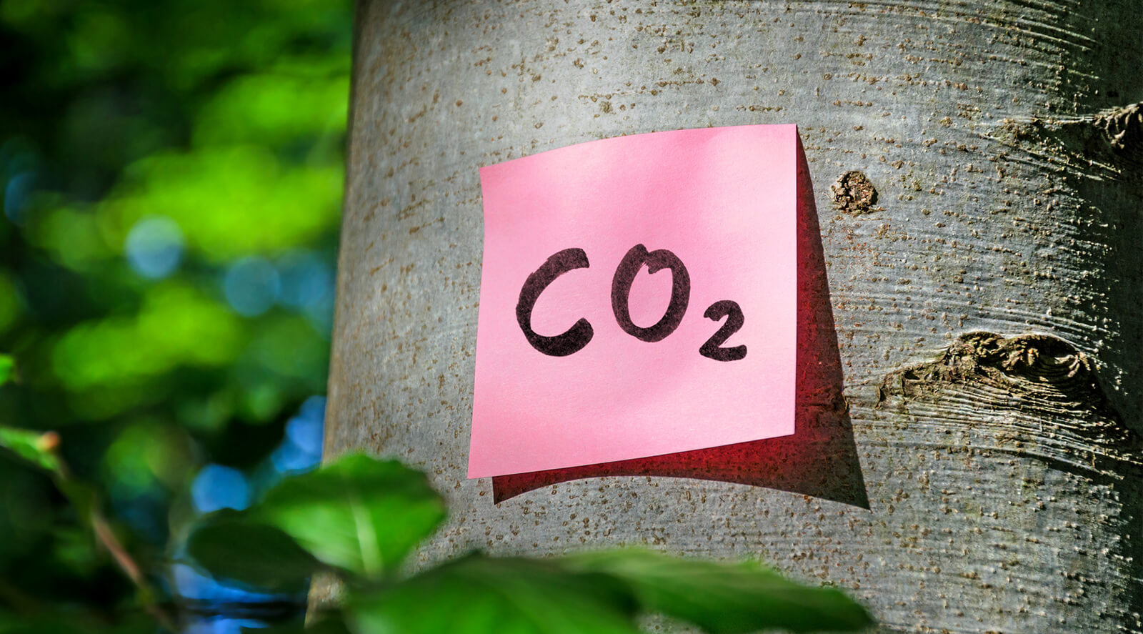 CO2-Post-It am Baum