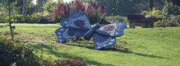Botanischer Garten Solingen Schmetterling