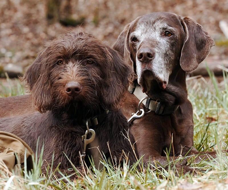 Max und Bruno